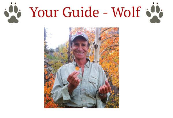 yourguidewolfbox